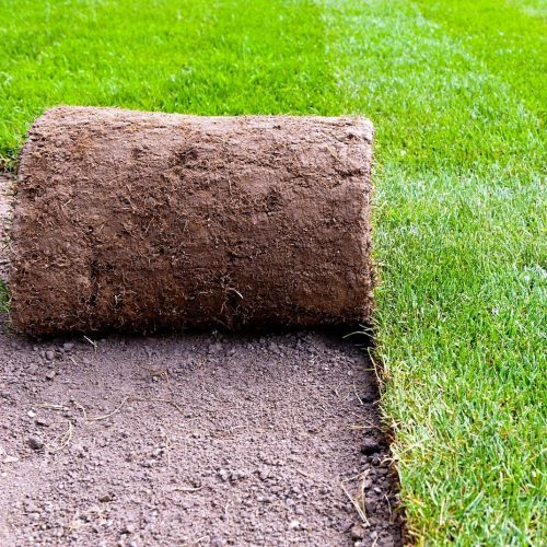 turf grass landscaping